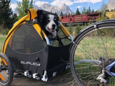 Przyczepka rowerowa dla psa - Wypożyczalnia Itinere